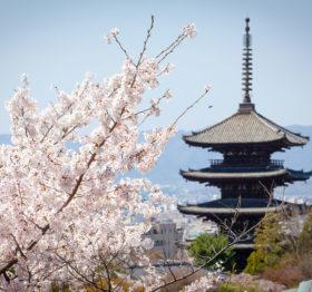 桜と八坂の塔