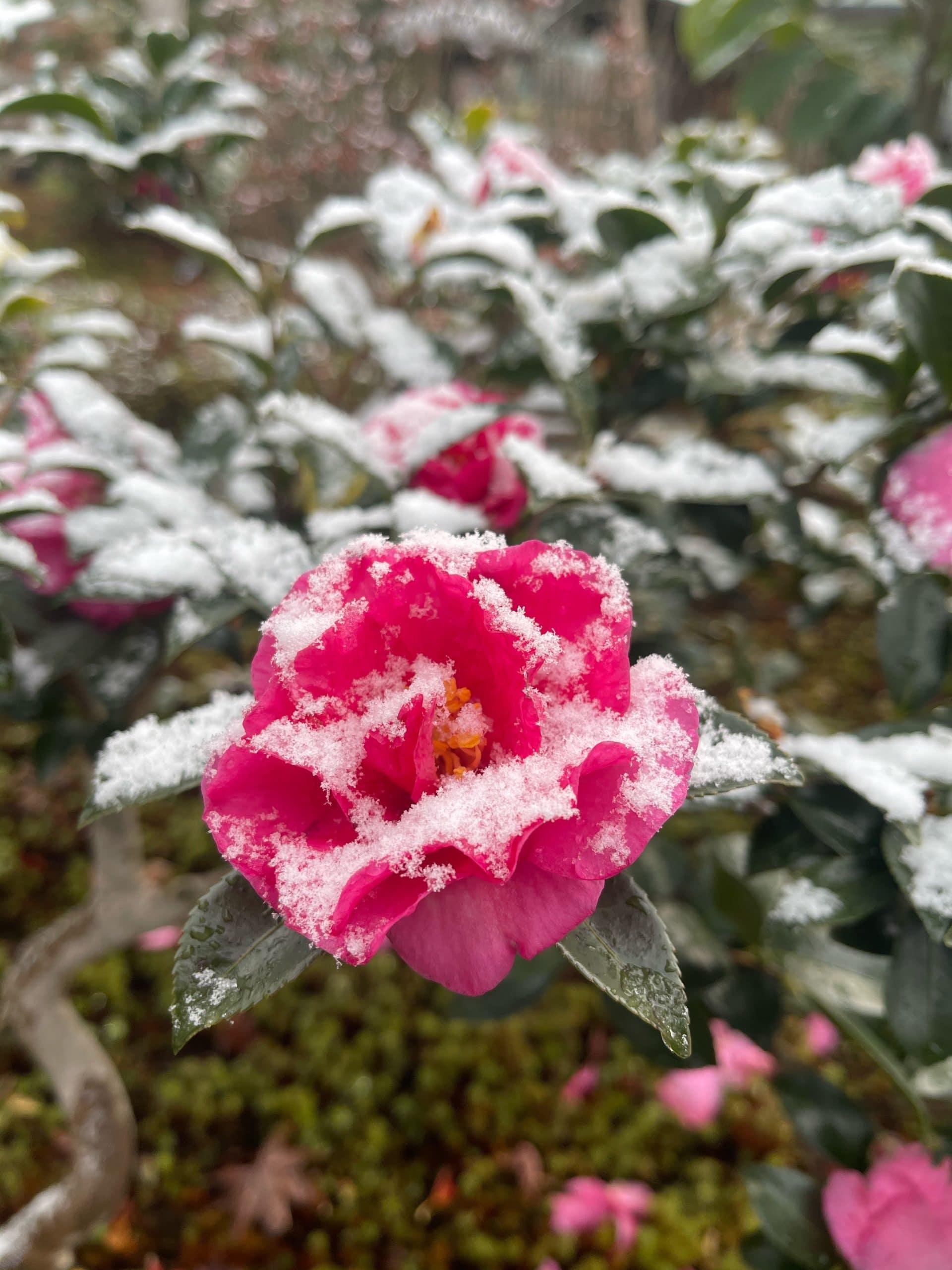 雪化粧された植物